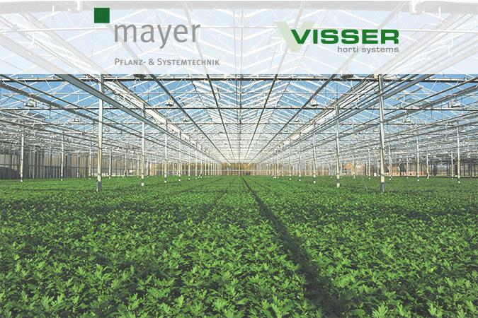 Mayer Visser Header